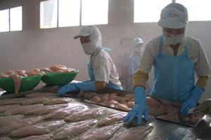 Luật sư Mỹ cảnh báo việc giảm giá cá tra xuất khẩu