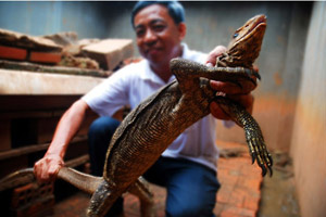 Đầu tư nuôi động vật hoang dã: Không dễ!