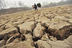 FAO: Dự báo sản lượng gạo thế giới giảm do tình trạng khô hạn