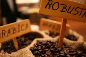 Giá cà phê trong nước: Ổn định ở mức cao