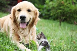 5 cách tiết kiệm chi phí để chăm sóc cho vật nuôi