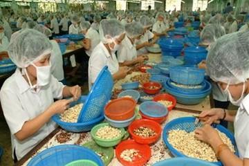 Cần 150.000- 200.000 tấn nguyên liệu cho ngành điều xuất khẩu