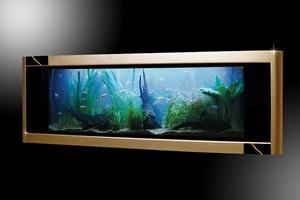Bể cá đắt nhất thế giới