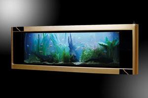 Bể cá cảnh làm từ 64kg vàng