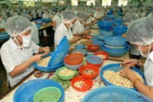 Hạt điều Việt Nam được nhiều nước ưa chuộng
