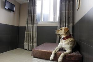Khách sạn dành riêng cho chó