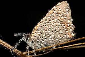 Giấc ngủ côn trùng