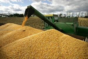 Nguyên liệu sản xuất thức ăn chăn nuôi: nhập khẩu là chủ yếu