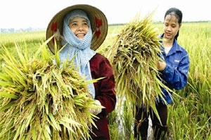 Trung Quốc gom hàng, nông dân được 'làm giá'