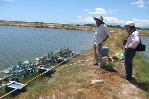 Thừa Thiên - Huế: Lãnh đạo xã lén lút nuôi tôm thẻ chân trắng