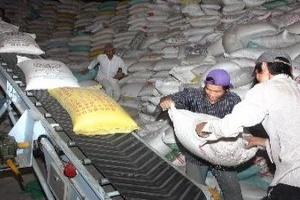 Đầu tư 40 tỷ đồng nâng chất lượng gạo xuất khẩu