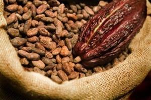 Barclays: Nguồn cung cacao niên vụ 2011-2012 căng thẳng