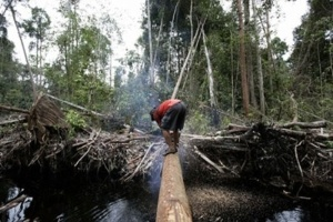 Trả công nửa ký cá, làm sao giữ được rừng?