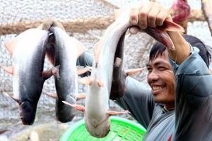 Kim ngạch xuất khẩu cá tra sẽ đạt tới 1, 6 tỷ USD