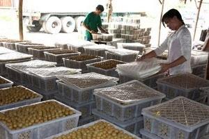 Trung Quốc đẩy mạnh hợp tác với Việt Nam, Thái Lan