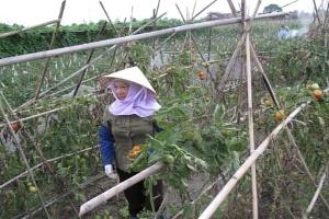 Nông dân sản xuất nông nghiệp: Vẫn chủ yếu lấy công làm lãi