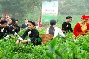Thái Nguyên trồng mới 1.000ha chè chất lượng cao
