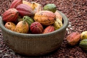 Cacao tăng mạnh do lo sợ nguồn cung của Bờ Biển Ngà