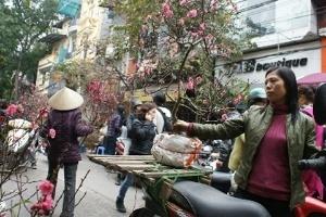 Hoa, cây cảnh Tết: Giá không cao hơn năm ngoái