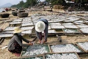 Ngư dân Phú Yên trúng đậm mùa cá cơm đầu năm
