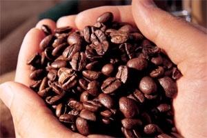 Niên vụ cà phê 2011-12: Nửa chặng đường nhìn lại