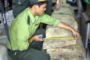Thu giữ 366kg gỗ sưa ở Phong Nha trị giá khoảng 10 tỉ đồng