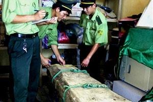 Làng quê Phong Nha đang bất an vì gỗ sưa