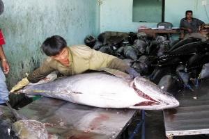 Nguy cơ mất thương hiệu cá ngừ đại dương