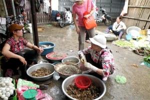 Sợ đồ bẩn: Rau dại, cá đồng bán chạy