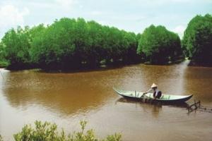 TP.HCM: Chưa cho nuôi tôm trong rừng ngập mặn