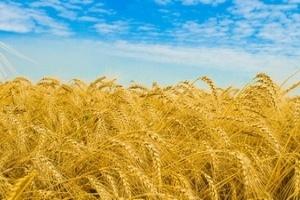 Belarus có khả năng xuất gần 5 tỷ USD nông sản