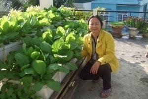 Mốt trồng rau tại gia của dân Sài thành