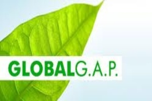 Chuẩn Global GAP sắp mất vì thiếu tiền