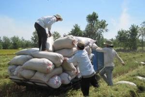Bộ Tài chính: Công bố giá lúa định hướng mua tạm trữ