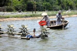 Phản đối Hoa Kỳ điều tra sản xuất tôm của Việt Nam
