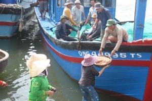 Quảng Ngãi: Ngư dân trúng đậm ruốc biển