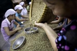 Sản lượng cà phê của Việt Nam có thể giảm 30% do hạn hán