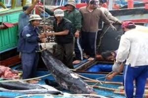Đà Nẵng: Đánh bắt xa bờ đạt thu nhập cao