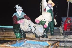Quảng Ninh: ngư dân trúng đậm nhờ vụ sứa bội thu
