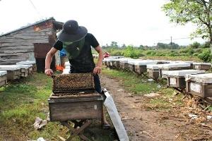 Mật ong Việt Nam được phép xuất khẩu sang thị trường EU