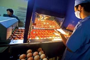 Quản lý lỏng lẻo, đầu tư vào quả trứng dễ mất tiền