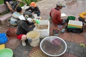 Ngư dân thu nhập cao từ cá mú giống
