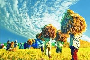 Khí hậu thay đổi sẽ đe dọa đến an ninh lương thực