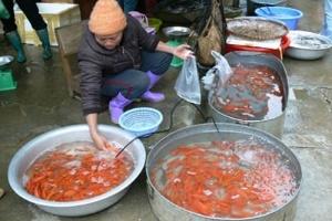 Cá cảnh Trung Quốc bao vây làng nghề Yên Phụ