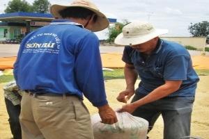 Còn nhiều chi phí chưa được tính vào giá gạo xuất khẩu
