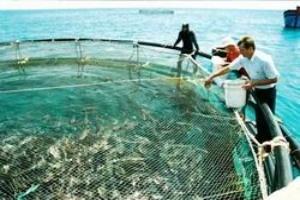 Kiên Giang phát triển nuôi trồng thủy sản bền vững