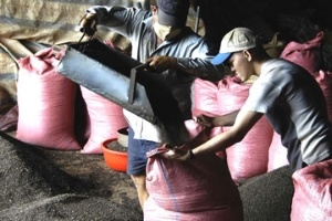 Cấm DN FDI thu mua nông sản: Chắc gì nông dân lợi!