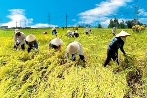 """Ba khoảng trống """"rủi ro"""" của nông nghiệp Việt Nam"""
