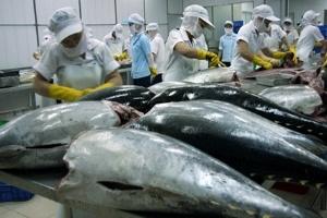 Xuất khẩu cá ngừ thêm rào cản mới