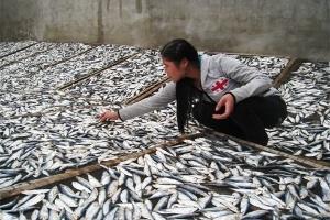 Góc khuất chế biến hải sản khô